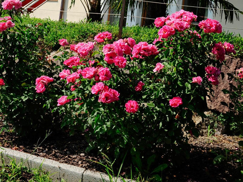 Il nostro giardino di rose residence marlengo merano e